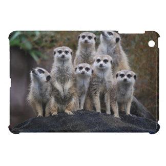 Safari animal África Suricate lindo de Meerkat
