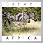 Safari Arica Posters