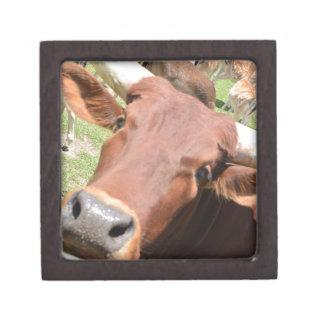 Safari Brown Cow Premium Trinket Boxes