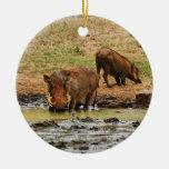 Safari de Warthogs wallowing Adorno Redondo De Cerámica