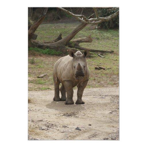 Safari Dreams 10 Photo