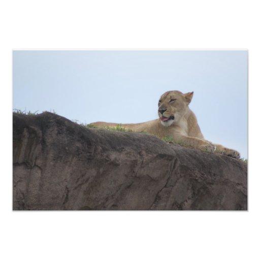 Safari Dreams 3 Photo