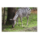 Safari Dreams 4 Photo Print