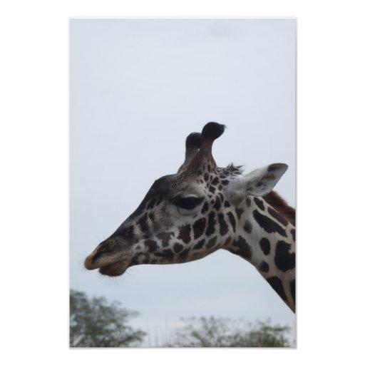 Safari Dreams 5 Photo Art