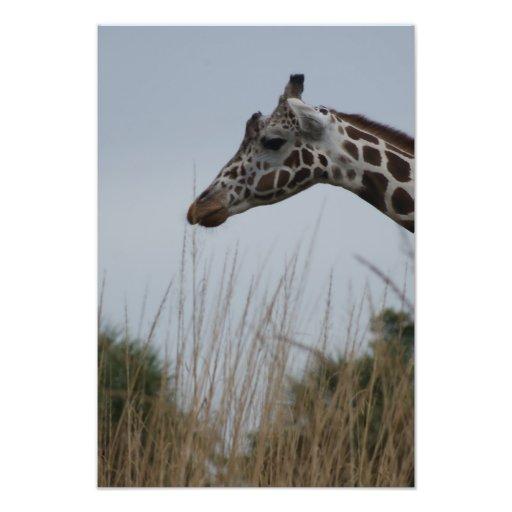 Safari Dreams 7 Photograph