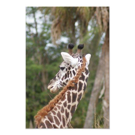 Safari Dreams 9 Photo Print