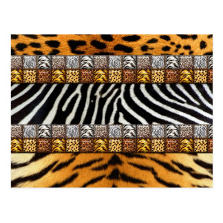 Safari Prints Postcard