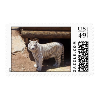 Safari Tiger Standing Postage