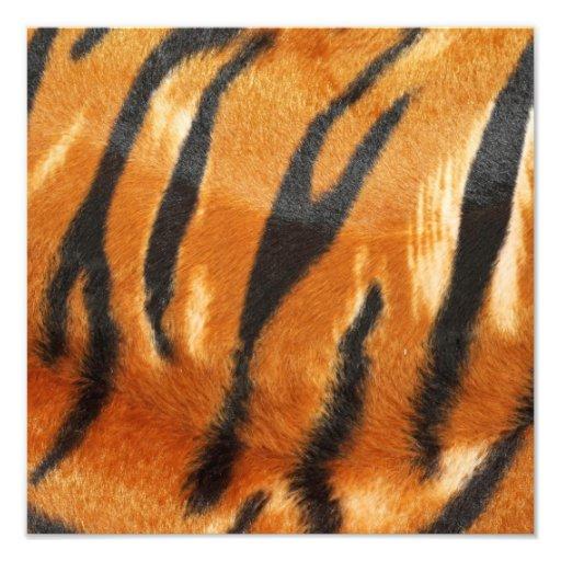 Safari Tiger Stripes Print Photograph