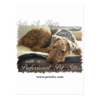 Safe At Home with a Professional Pet Sitter Postcard