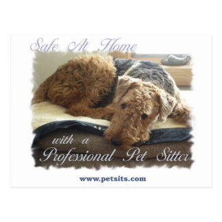 Safe At Home with a Professional Pet Sitter Postcards