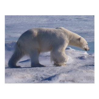 Safe the Polar bears! Postcard