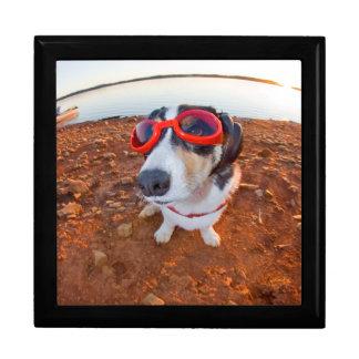 Safety Dog Jewelry Box