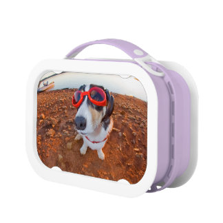 Safety Dog Lunch Box