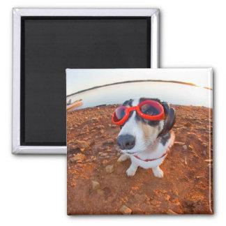 Safety Dog Magnet