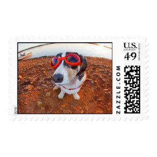 Safety Dog Stamp