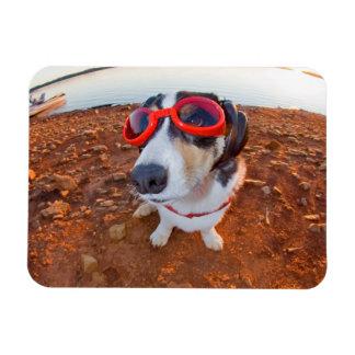 Safety Dog Magnets