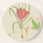 Saffron Botanical Illustration Drink Coaster