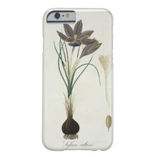 Saffron Crocus from 'Phytographie Medicale' by Jos Barely There iPhone 6 Case