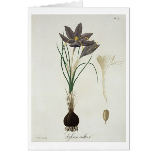Saffron Crocus from 'Phytographie Medicale' by Jos Card