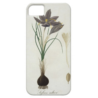 Saffron Crocus from 'Phytographie Medicale' by Jos iPhone SE/5/5s Case