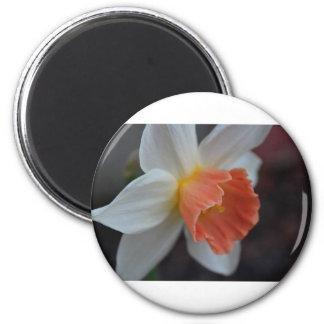 Saffron Ring Magnet