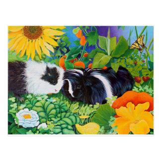 Safi and Zaria Guinea Pigs Postcard