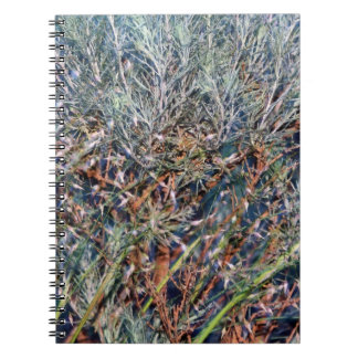 Sage and Summer Grass Abstract Note Book