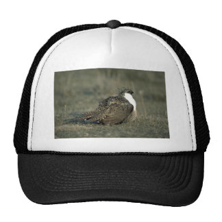 Sage grouse trucker hat