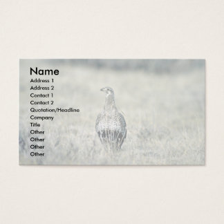 Sage grouse, hen business card