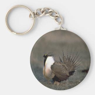 Sage grouse strutting basic round button keychain