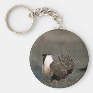 Sage grouse strutting keychain