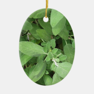 Sage plant in the garden. Tuscany, Italy Ceramic Ornament