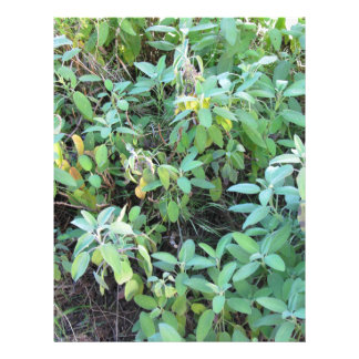 Sage plant letterhead