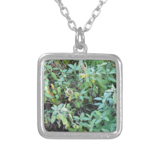 Sage plant silver plated necklace