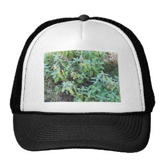 Sage plant trucker hat