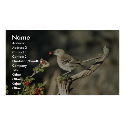 Sage thrasher Double-Sided standard business cards (Pack of 100)