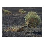 Sagebrush Desert Postcard