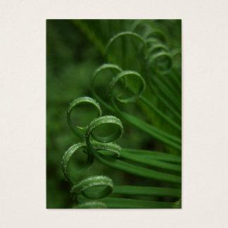Sago Palm Frond  ATC Photo Card