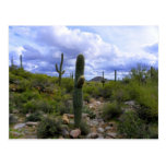 Saguaro <Add Your Own Text> Postales