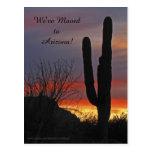 Saguaro at Sunset, New Address Announcement Postcard