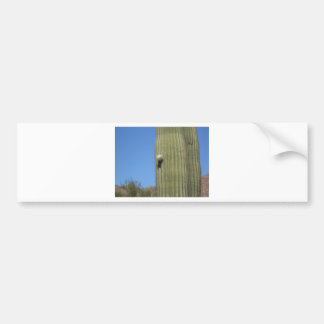 Saguaro Bud Bumper Sticker