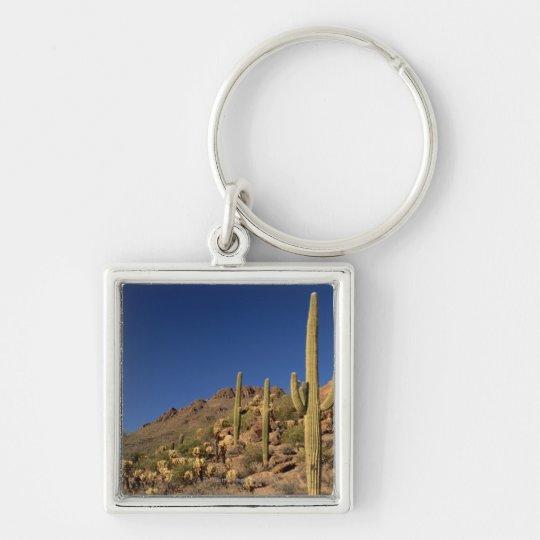 Saguaro cacti and Tucson Mountains, Tucson Keychain