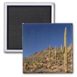 Saguaro cacti and Tucson Mountains, Tucson 2 Inch Square Magnet
