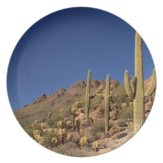 Saguaro cacti and Tucson Mountains, Tucson Melamine Plate