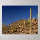 Saguaro cacti and Tucson Mountains, Tucson Poster