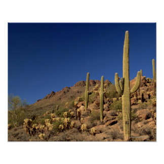 Saguaro cacti and Tucson Mountains, Tucson Poster