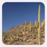 Saguaro cacti and Tucson Mountains, Tucson Square Sticker