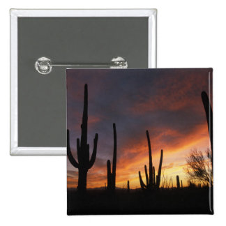 saguaro cacti, Carnegiea gigantea, after 2 Inch Square Button