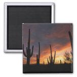 saguaro cacti, Carnegiea gigantea, after 2 Inch Square Magnet